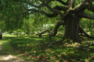 oaksm